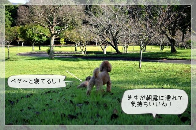 大好きな公園06