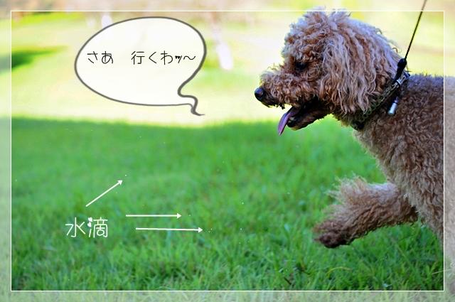大好きな公園02