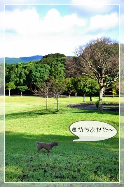 大好きな公園07