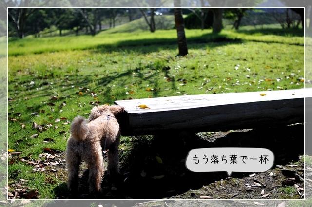 大好きな公園21