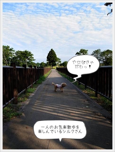 お散歩06