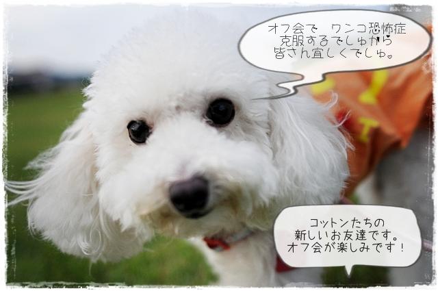 花梨ちゃん10