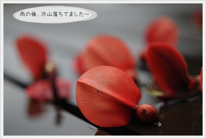 雨の日13