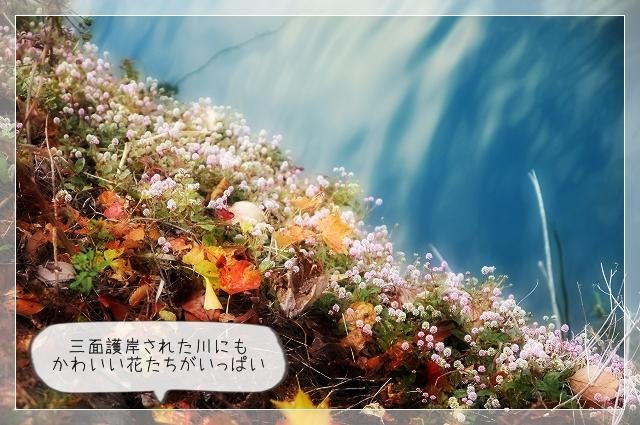 朝散歩05