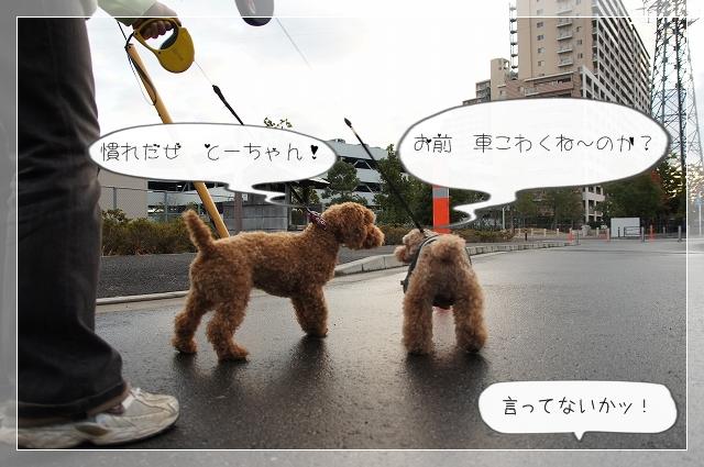 朝散歩01