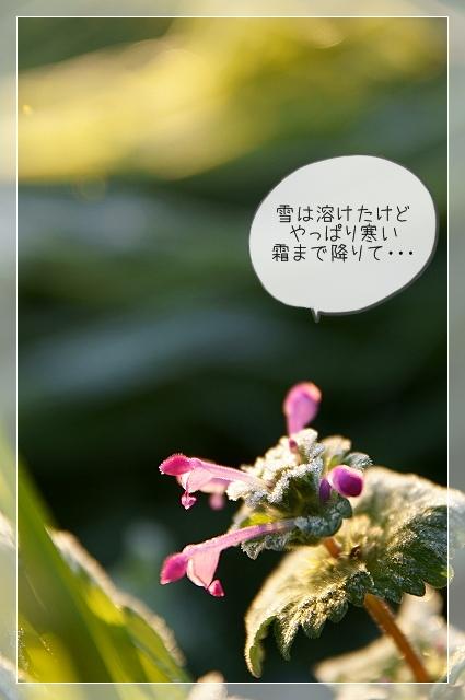 寒い新年04