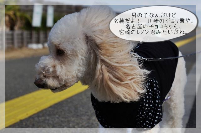 寒い新年09