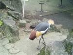 かっこいい鳥