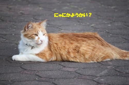 crea100617-18.jpg