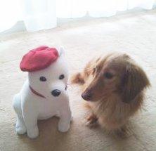 ホワイト犬