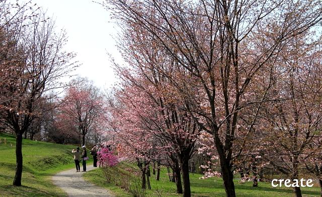 DPP0 668 063i池のの近くの桜0001