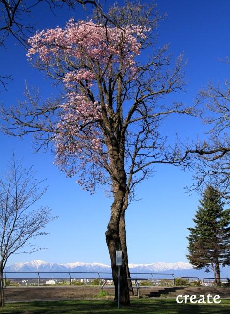 DPP0 668 023山と桜縦0001