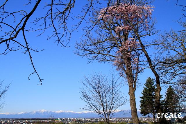 DPP0 668 024山と桜横0001