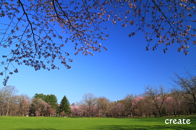 DPP0 668 029 公園芝を入れて0001