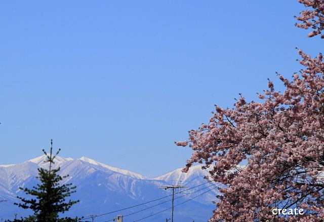 DPP0 668 086 山と桜0001