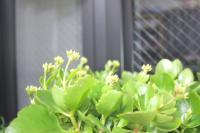 091211 植物2