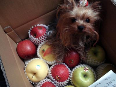 マリとリンゴ