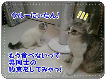 10_20110810011411.jpg