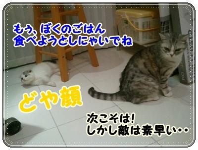 11_20110808210645.jpg