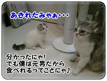 11_20110810012015.jpg