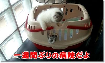 1_20110703233126.jpg