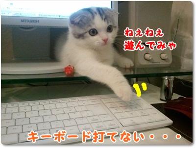 1_20110801021635.jpg