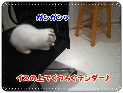 1_20110808210548.jpg