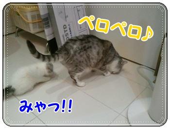 1_20110810011318.jpg