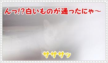 1_20110814004443.jpg