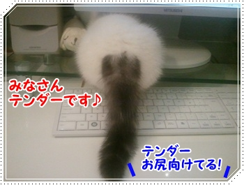 1_20110820122032.jpg