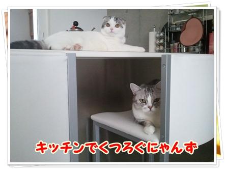1_20111212012546.jpg