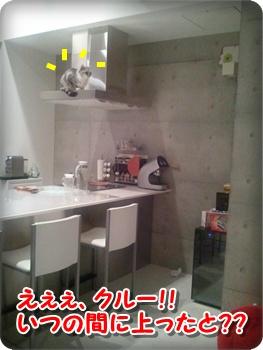 1_20111212224603.jpg