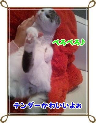 1_20111214015512.jpg