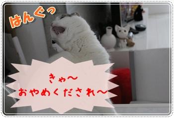 2-002_20120203013426.jpg