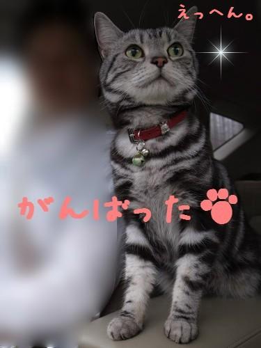 20110523_2_R0039666.jpg