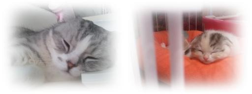 2011-06-18 13.47-horz