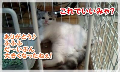 2011_08_14_22_45_06_20110923121318.jpg