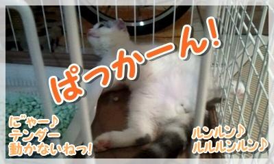 2011_08_14_22_45_12_20110923121239.jpg