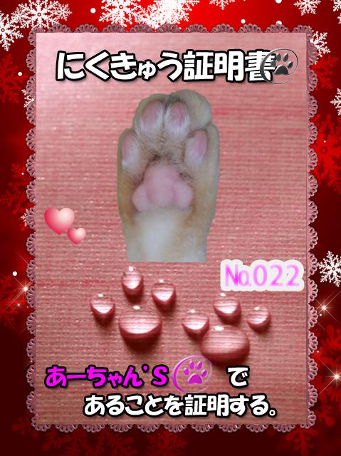 肉球110227(あーちゃん)_edit