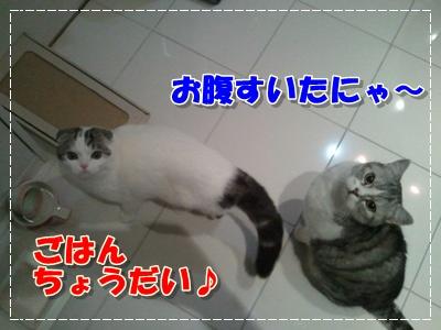 2012-01-24 19.09.37-006