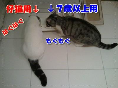 2012-01-24 19.13.02-001