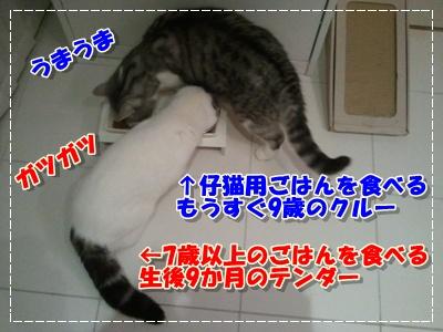 2012-01-24 19.13.12-003