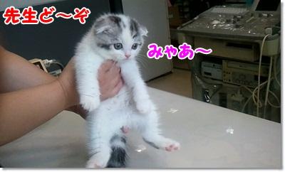 2_20110703233125.jpg