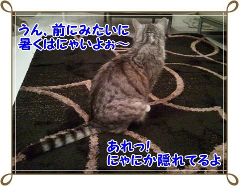 2_20110717232249.jpg
