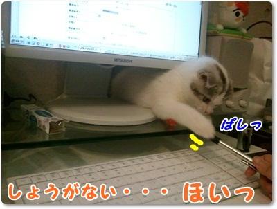 2_20110801021634.jpg