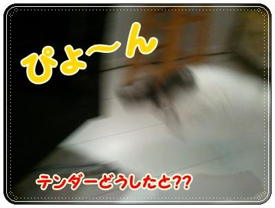 2_20110808210548.jpg