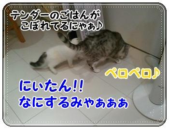 2_20110810011318.jpg