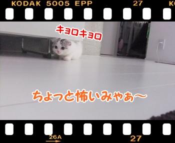 2_20110813132901.jpg
