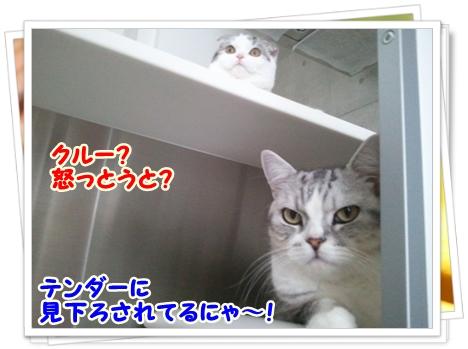 2_20111212012546.jpg