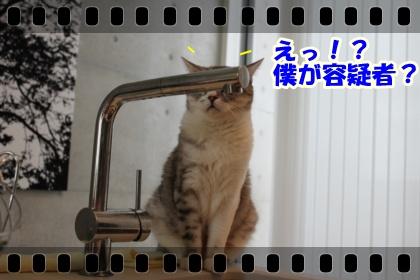 2_20120317025707.jpg